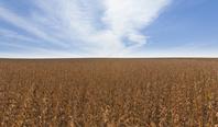 アメリカ合衆国 大豆畑
