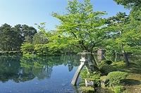 石川県 兼六園の徽軫灯籠