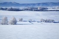 北海道 雪原の丘陵と水田 美瑛町