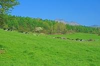 山梨県 朝の八ヶ岳牧場と権現岳