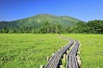 群馬県 尾瀬 上田代の木道から望む至仏山