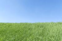 青空と緑の草地