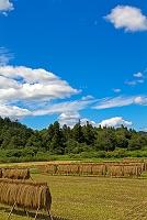 岐阜県 山県市 はざ掛けの天日干し