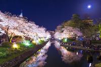 富山県 富山市役所と松川の夜桜