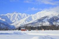 長野県 早朝の北アルプスと白馬村の雪景色