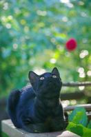 ウッドデッキで見上げる子猫