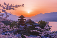 広島県 厳島神社夕景