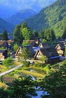 富山県 五箇山 朝日射す新緑の相倉合掌造り集落と水田