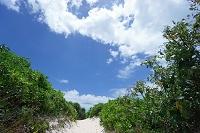 沖縄県 砂山ビーチへ続く道