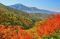 富山県 弥陀ケ原付近の紅葉と薬師岳