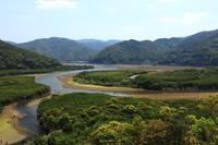 鹿児島県 奄美大島のマングローブ