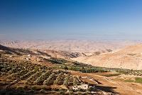 オリーブ畑 アジュルン近郊 ヨルダン