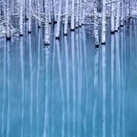 初雪の青い池とカラマツ林