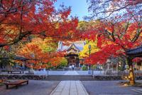 静岡県 紅葉の修善寺 本堂