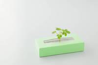 新芽とティッシュペーパー