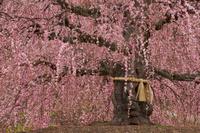三重県 鈴鹿の森庭園