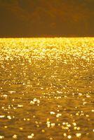 秋田県 田沢湖水面の黄色いリング