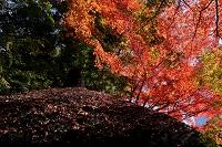 東京都 小石川後楽園の紅葉