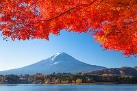 山梨県 河口湖の紅葉と富士山