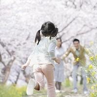 桜並木と両親に駆け寄る女の子の後ろ姿