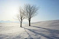 北海道 丘の陰影