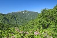 青森県 天狗岳と向白神岳と双耳峰