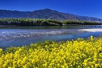 徳島県 菜の花と吉野川 脇町潜水橋