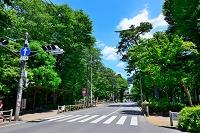 東京都 井の頭自然文化園前の吉祥寺通り