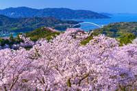 愛媛県 桜咲く開山公園