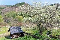 春の大出公園