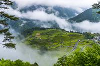 岐阜県 霧の天空の茶畑