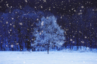 雪と一本の木