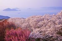 香川県 桜咲く紫雲出山より瀬戸内海と島々夕景