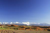 北海道 カラマツ黄葉と十勝岳連峰