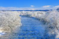 北海道 霧氷の釧路川