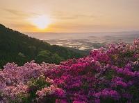 熊本県 ツツジ咲く長寿ヶ丘公園より阿蘇谷と朝日