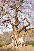 桜の下の犬と猫