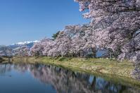 長野県 六道の堤の桜と中央アルプス