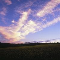 からし菜畑と田園と空