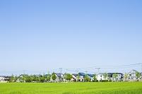 麦畑と住宅街