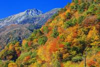 山梨県 南アルプス林道より紅葉の白鳳渓谷と南アルプス 北岳