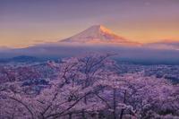 山梨県 春の新倉山浅間公園から眺める富士山