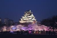 大阪府 大阪城 夜桜