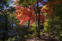 東京都 旧古河庭園 紅葉
