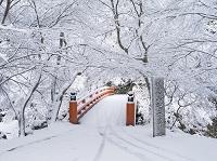 京都府 雪の西明寺参道 指月橋