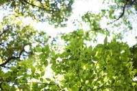 葛城山の新緑