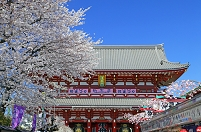 東京都 浅草寺宝蔵門とサクラ