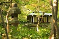 東京都 旧古河庭園 旧古河邸 茶室と灯籠