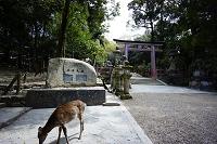 奈良県 奈良公園 春日大社 シカ