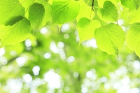 若葉と木漏れ日